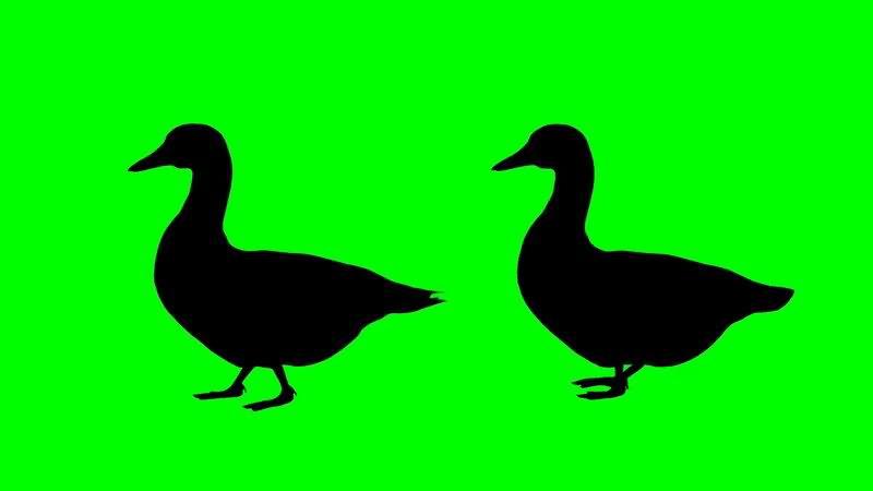 绿屏抠像鸭子剪影.jpg