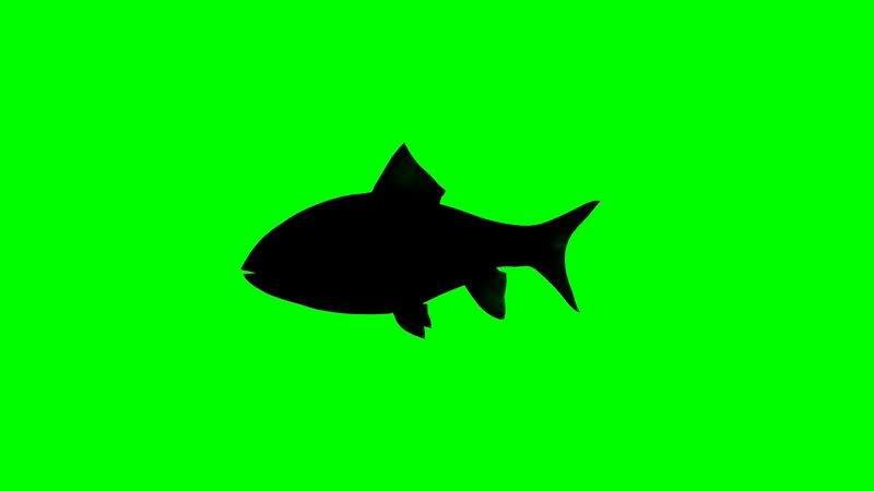 绿屏抠像鲤鱼剪影.jpg