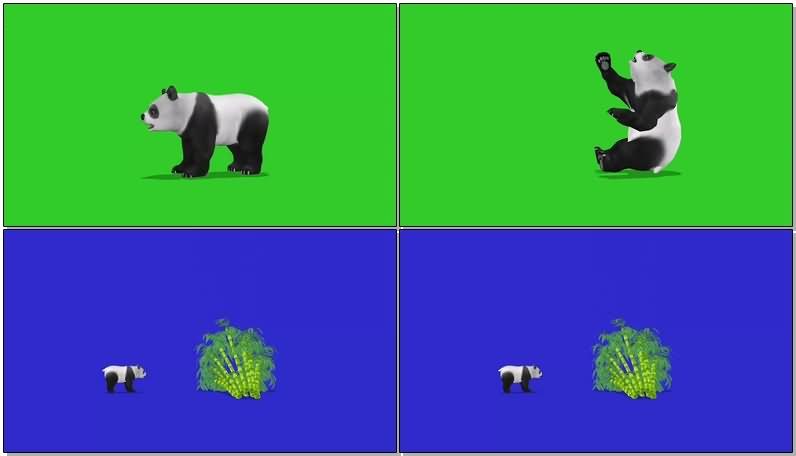 绿屏抠像大熊猫.jpg