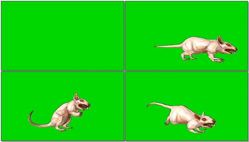 绿屏抠像变异老鼠.jpg
