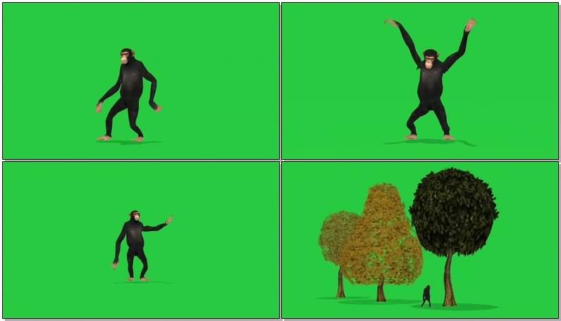 绿屏抠像黑猩猩.jpg