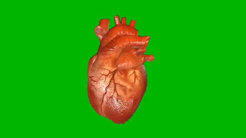 绿屏抠像跳动的心脏.jpg