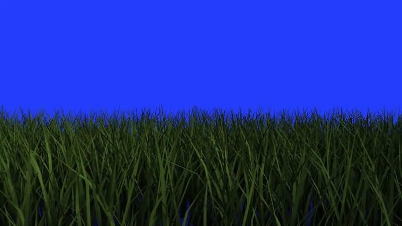 绿屏幕抠像绿草地视频素材