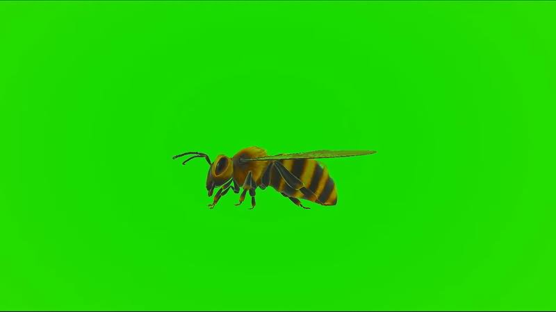 绿屏幕抠像蜜蜂.jpg