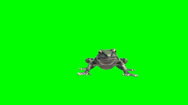 绿屏幕抠像青蛙.jpg