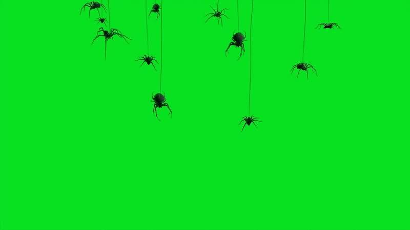 绿屏幕抠像蜘蛛.jpg