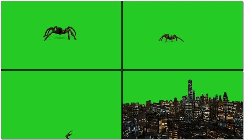 绿屏幕抠像巨型蜘蛛.jpg