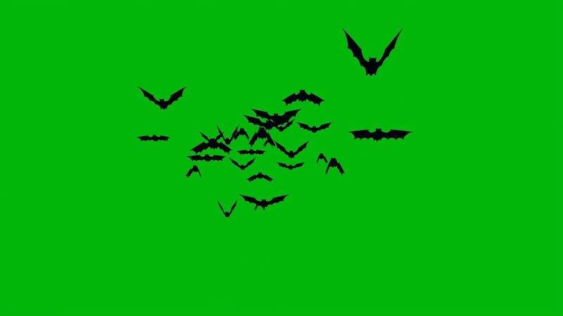 绿屏幕抠像蝙蝠.jpg