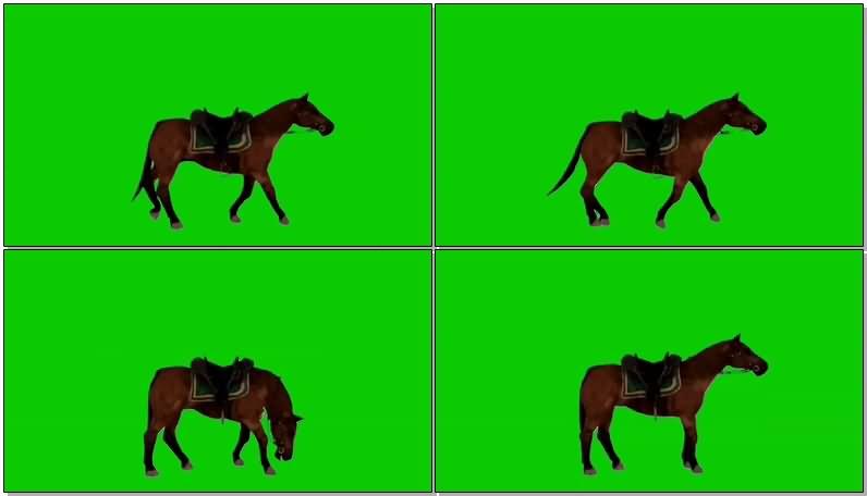 绿屏幕抠像奔跑的棕马.jpg