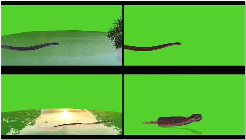 绿屏幕抠像蟒蛇.jpg