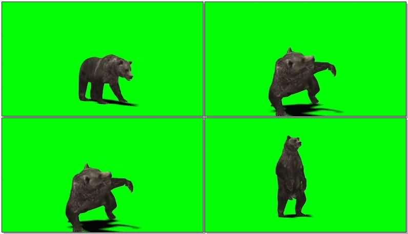 绿屏幕抠像黑熊视频素材