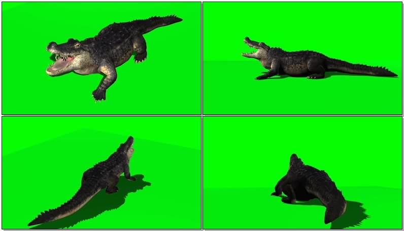 绿屏抠像视频素材鳄鱼视频素材