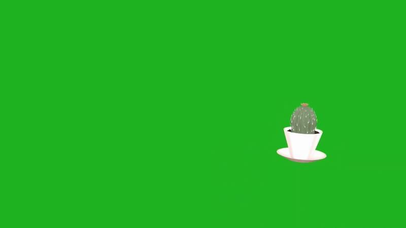 绿屏抠像视频素材仙人掌
