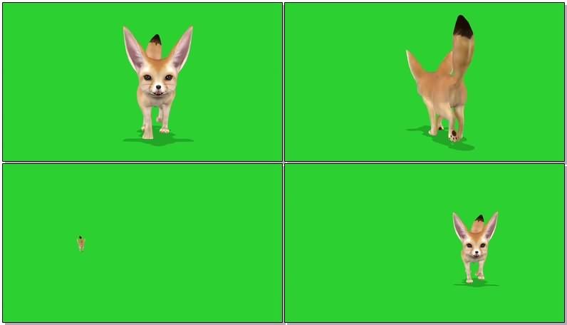 绿屏抠像视频素材狐狸.jpg