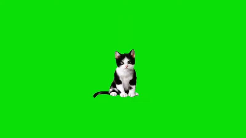 绿屏抠像视频素材猫咪.jpg