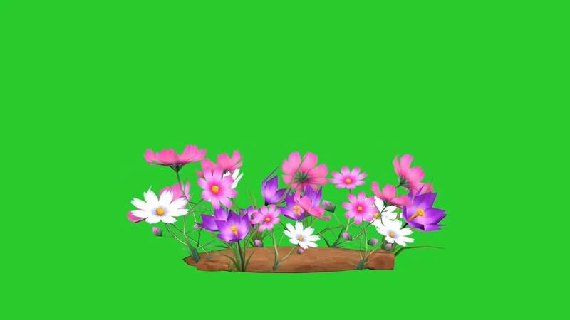 绿幕视频素材野花野草