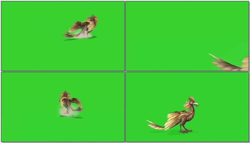 绿幕视频素材远古鸟类恐龙