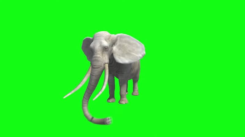 绿幕视频素材大象.jpg