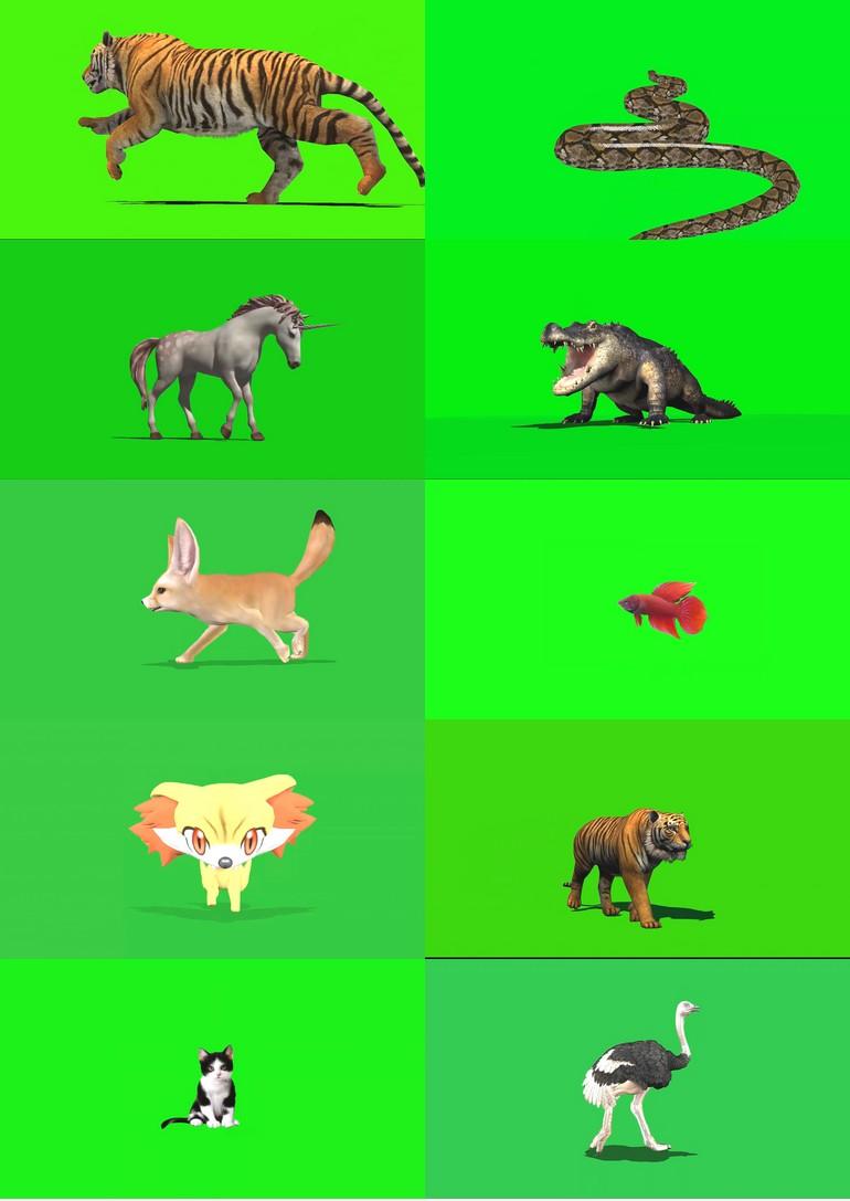 绿屏_绿布_绿幕动物|飞禽|走兽|鱼类|鸟类|生物视频素材打包100部第五套