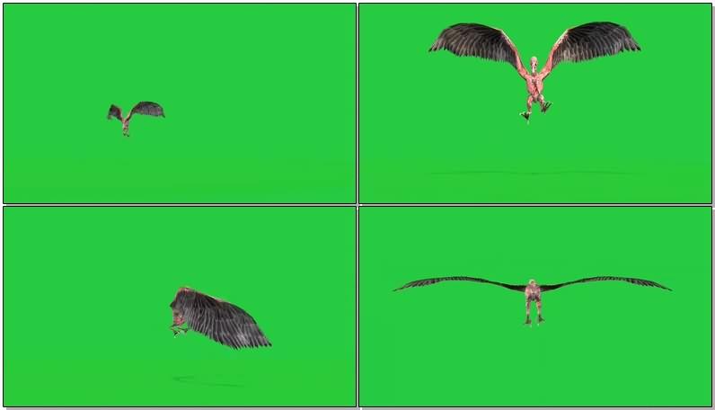 绿幕视频素材史前飞龙