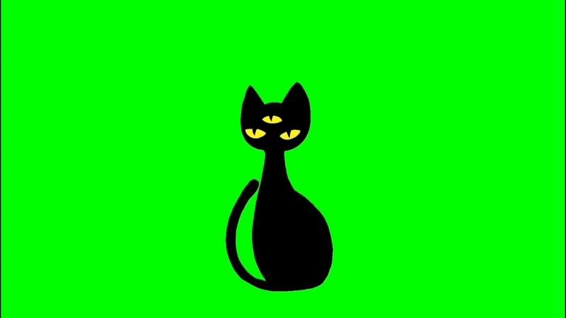 绿幕视频素材黑猫