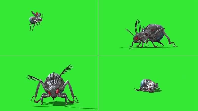 绿幕视频素材杀人蜂
