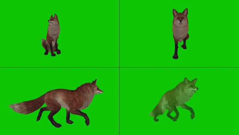 绿幕视频素材狐狸