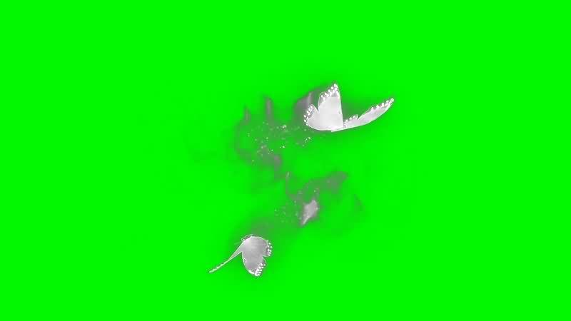 绿幕视频素材魔法蝴蝶