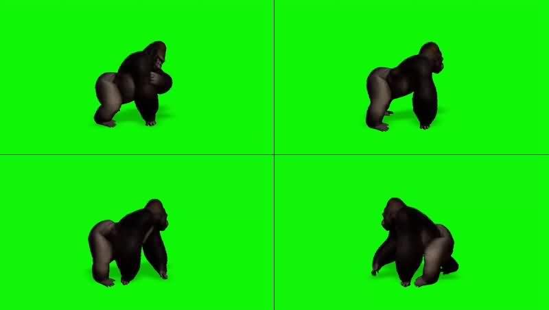 绿幕视频素材大猩猩
