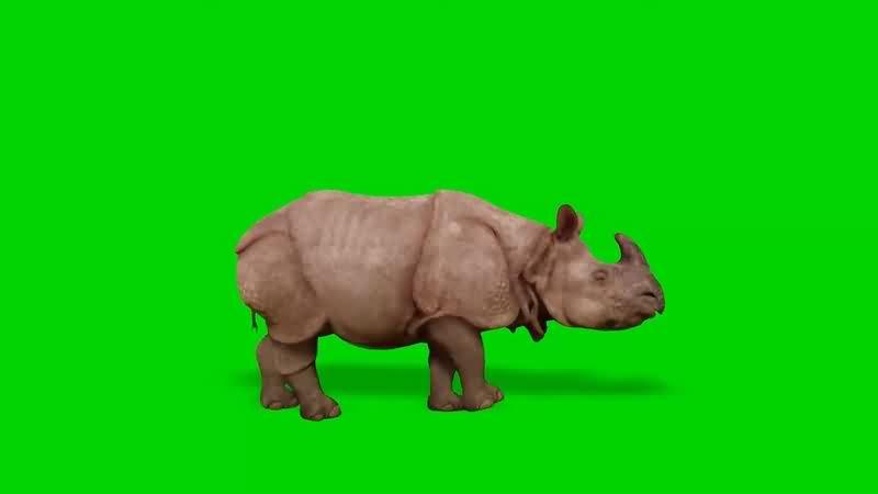 绿幕视频素材犀牛