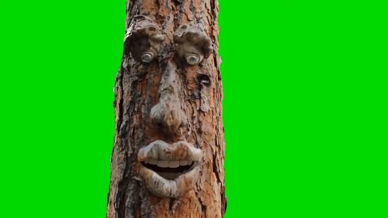 绿幕视频素材树精灵