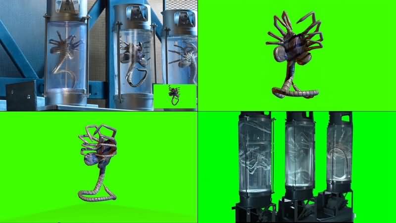 绿幕视频素材外星标本