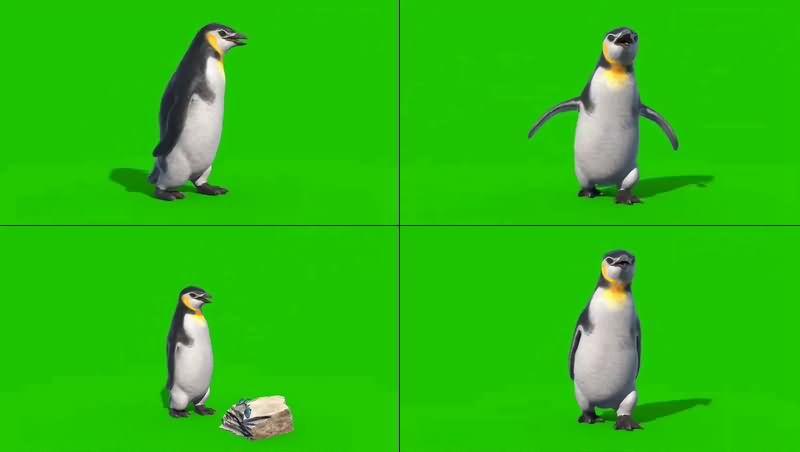 绿幕视频素材企鹅
