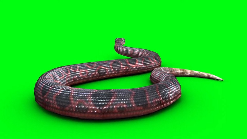 绿幕视频素材蟒蛇