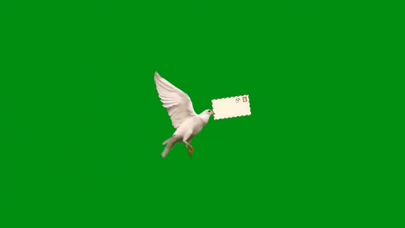 绿幕视频素材信鸽