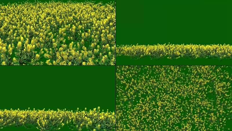 绿幕视频素材花丛