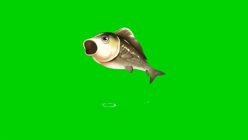 绿幕视频素材鲤鱼