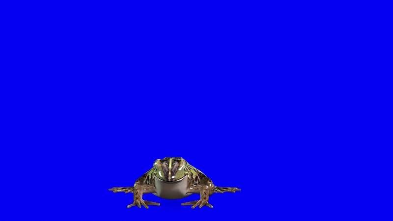 绿幕视频素材青蛙