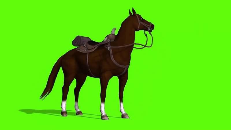 绿幕视频素材骏马
