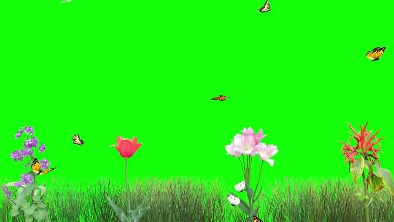 绿幕视频素材花草蝴蝶