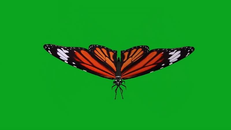 绿幕视频素材蝴蝶