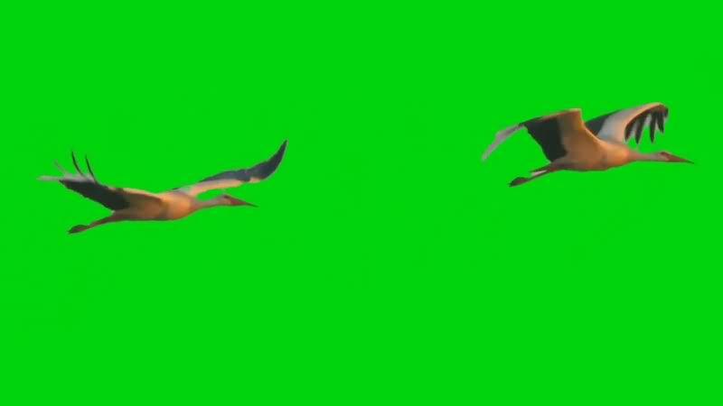 绿幕视频素材仙鹤