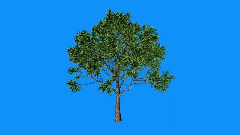绿幕视频素材大树