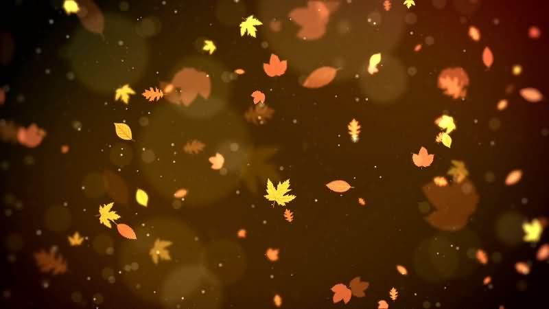 唯美的秋风落叶飘落可循环背景视频素材