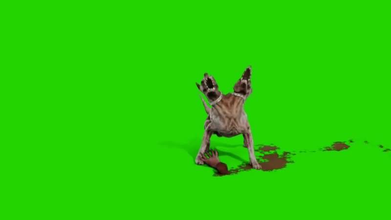 绿幕视频素材僵尸狗