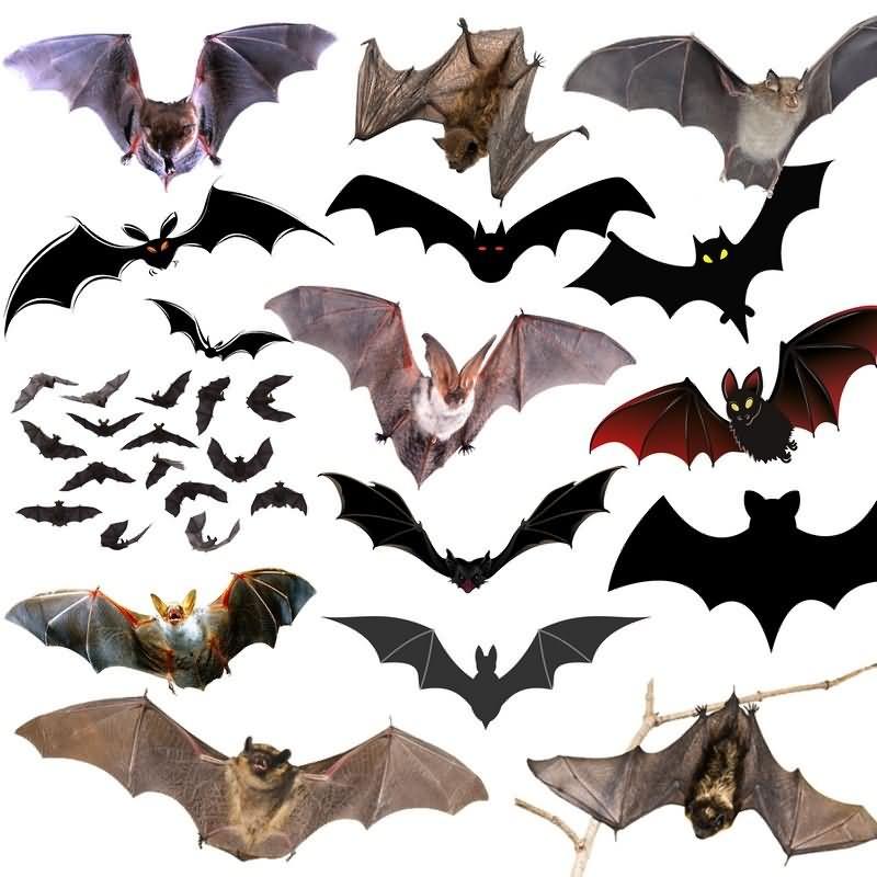 蝙蝠免抠分层PSD素材