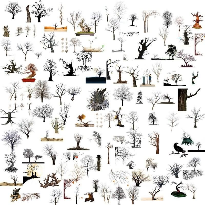 枯树免抠分层PSD素材