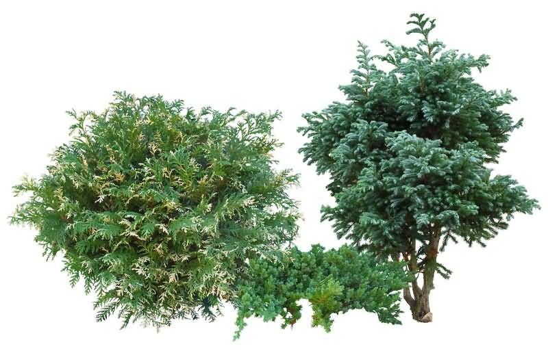 绿植免抠分层PSD素材