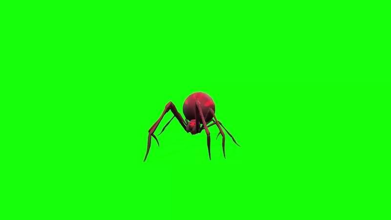 绿幕视频素材红蜘蛛