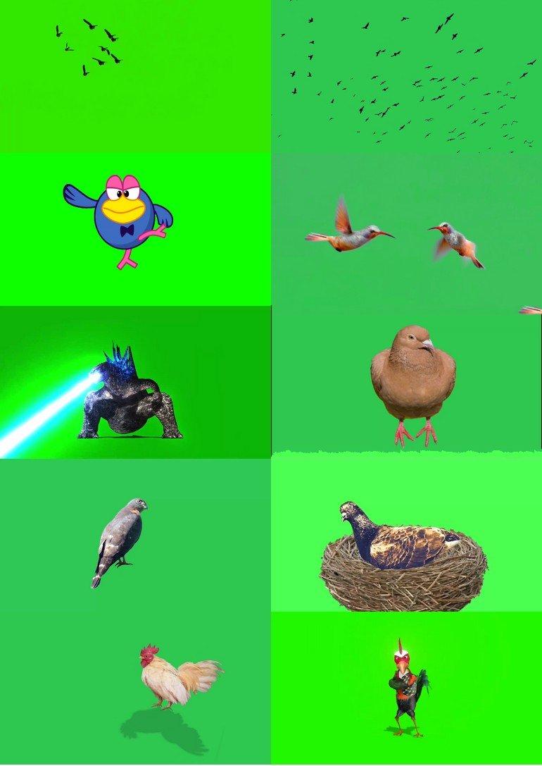 绿屏_绿布_绿幕动物|飞禽|走兽|鱼类|鸟类|生物视频素材打包100部第九套